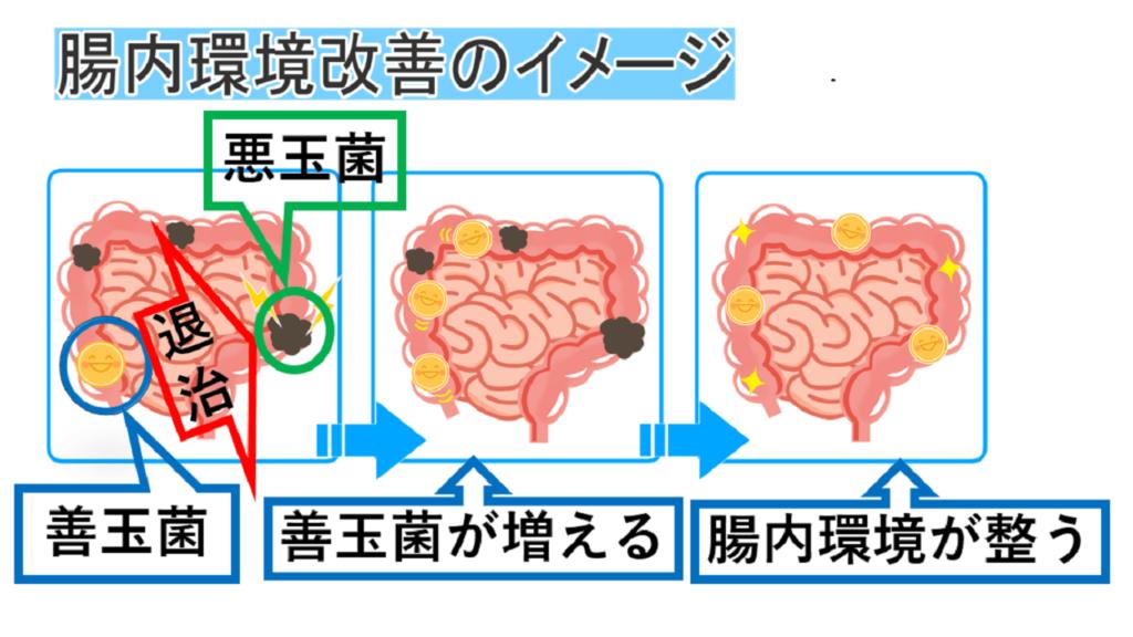 腸内環境の画像